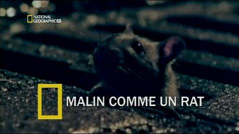 Malin Comme Un Rat